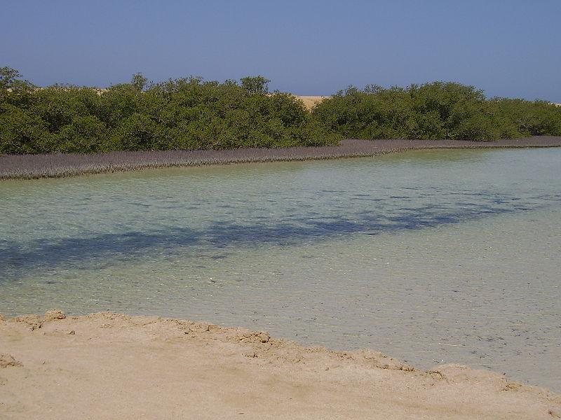 Mangrove du Parc National de Ras Mohammed