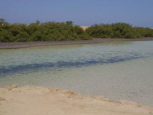 Mangrove du ras mohammed
