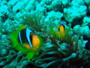 Poisson mer rouge