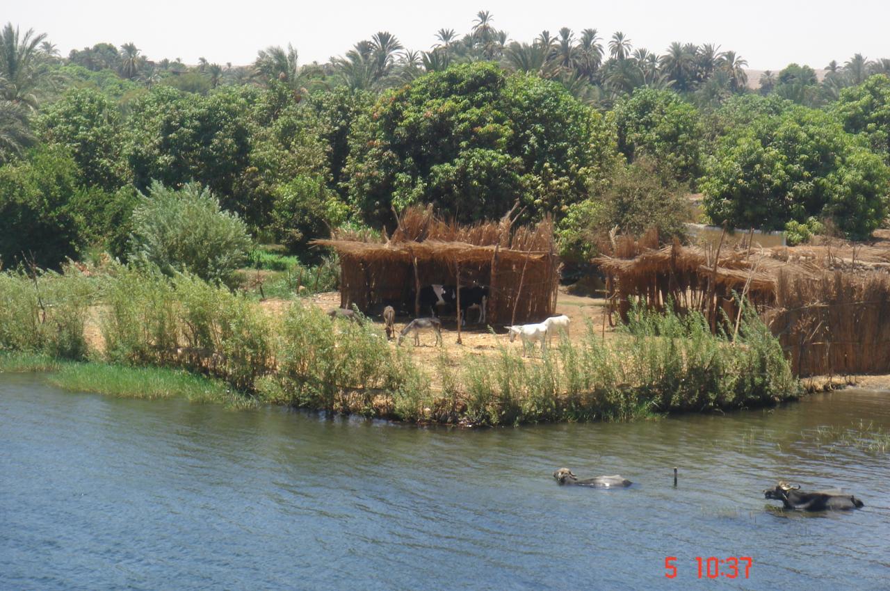 paysage insolite sur le Nil à coté de louxor