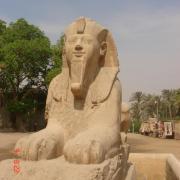 le sphinx du site de Memphis