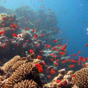 Corail mer rouge